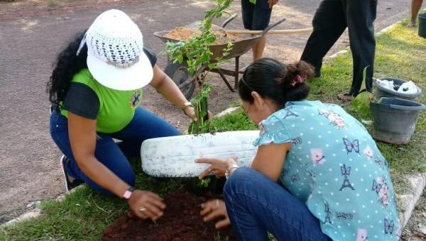 CENTRO DOS BORGES: mudas são plantadas na principal avenida do povoado