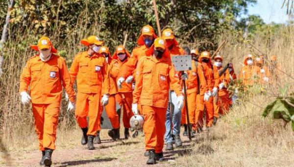 Governo do Tocantins divulga edital para contratação de brigadistas florestais