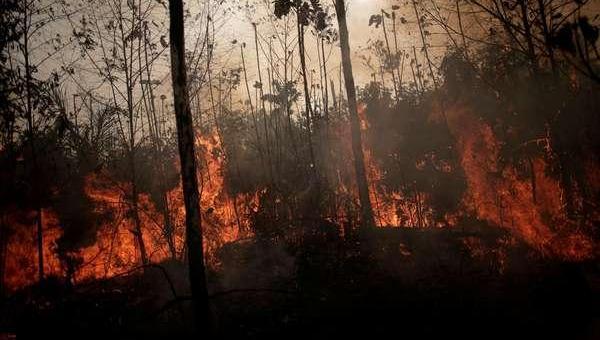 Desmatamento na Amazônia em junho é o maior em 5 anos