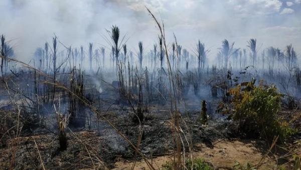 Incêndio devasta plantação de 5 mil pés de coco entre Palmas e Porto Nacional